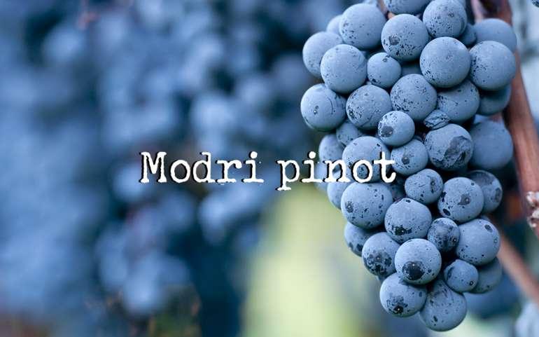 Modri Pinot