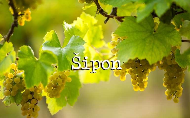 Šipon